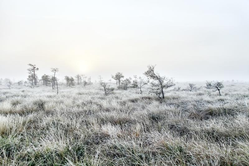 Mgłowy świt w bagnie zdjęcia royalty free