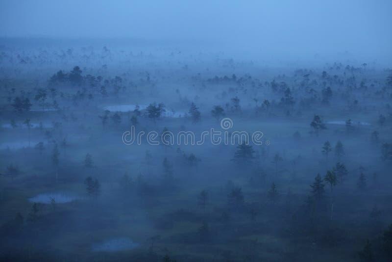 Mgłowy bagno ranek zdjęcia royalty free