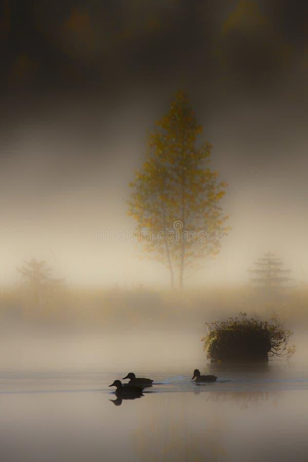 Mgłowy bagno, Vosges, Francja obrazy stock