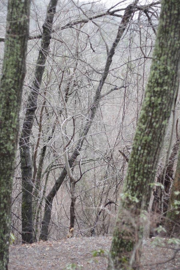 Mgłowy drewno ślad zdjęcia royalty free