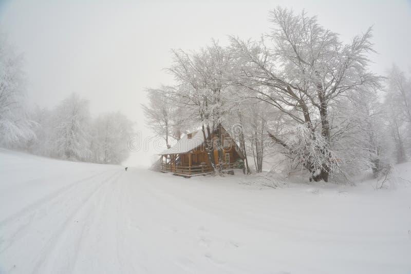 Mgłowy dzień, hoarfrost i buda pod dużym bukowym treе, obrazy stock