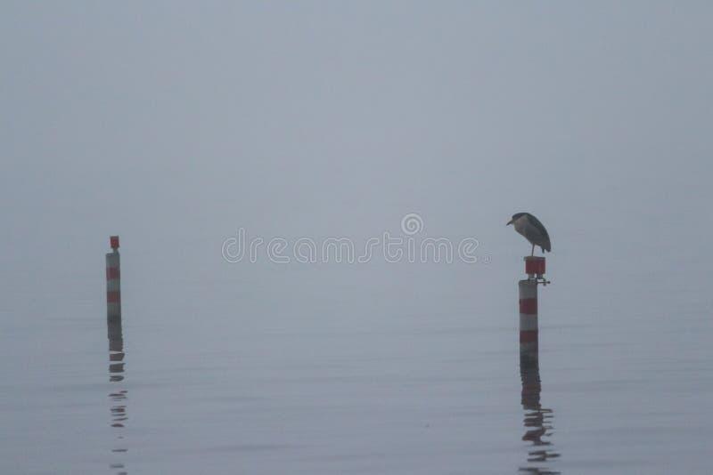 Mgłowy dzień na jeziorze zdjęcia stock