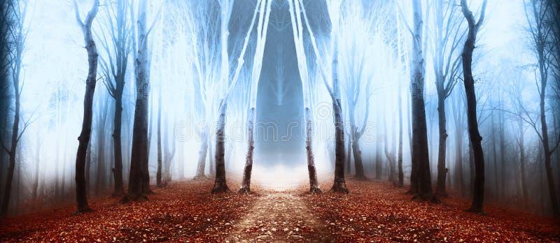 Mgłowy dzień w las podczas jesieni zdjęcia royalty free