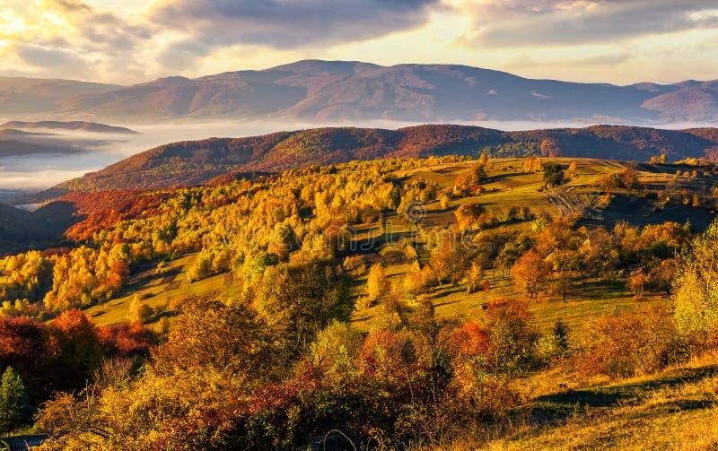 Mgłowy i gorący wschód słońca w Karpackich górach obraz royalty free