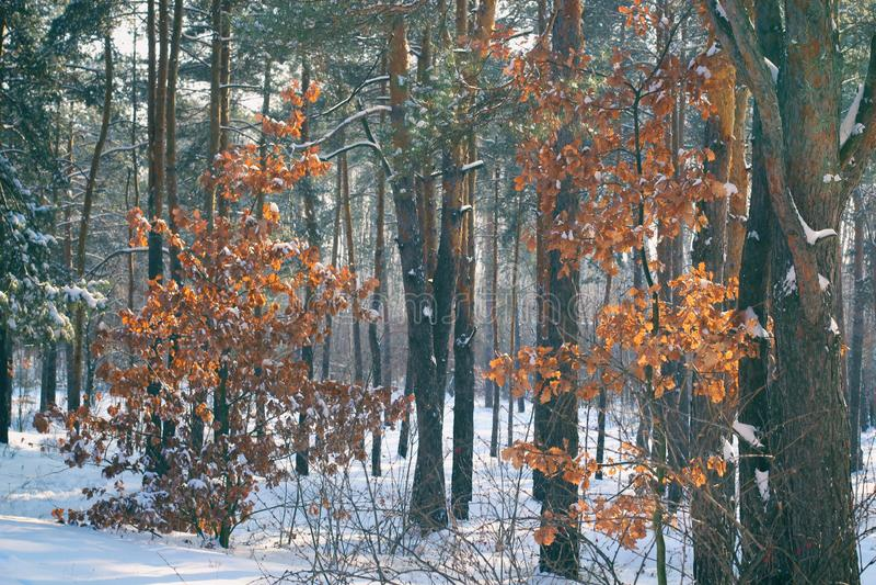 mgłowy jesień dzień szary zima las zdjęcie stock