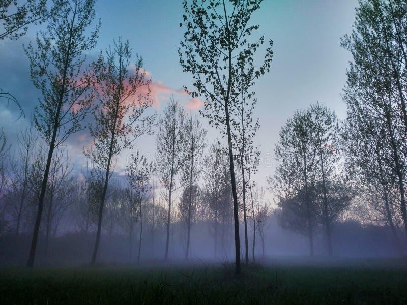 mgłowy krajobraz fotografia royalty free