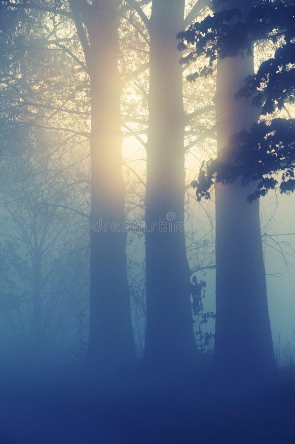 mgłowy krajobrazowy zdjęcia royalty free