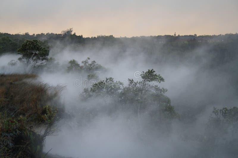 mgłowy las zdjęcie royalty free