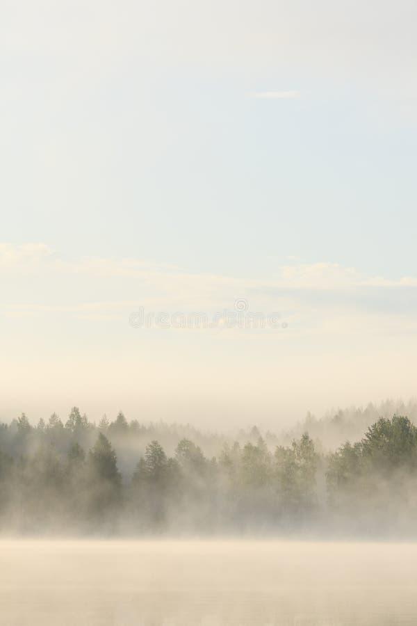 Mgłowy las i jezioro przy świtem zdjęcia stock