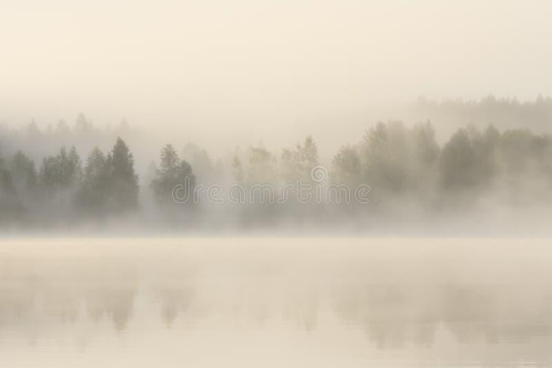 Mgłowy las i jezioro przy świtem zdjęcie royalty free
