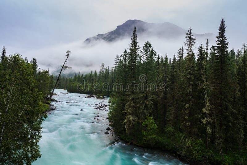 Mgłowy ranek na halnej rzece asterów jesień magenta nastrój wiele menchie zdjęcia royalty free