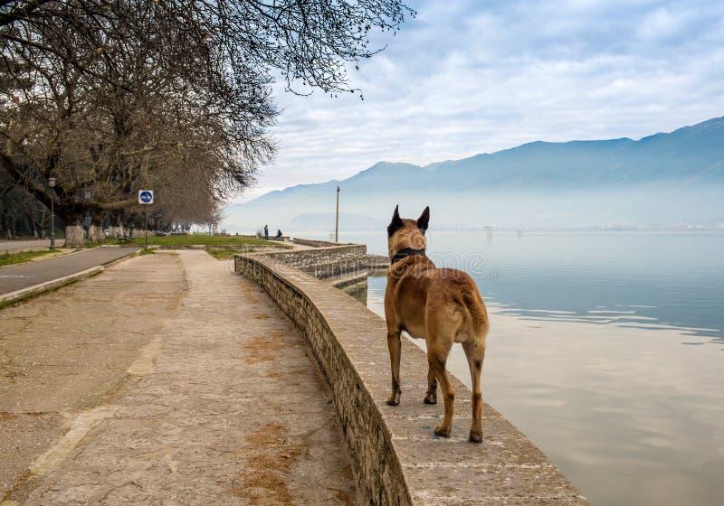 Mgłowy ranek na jeziornym Pamvotis obrazy royalty free