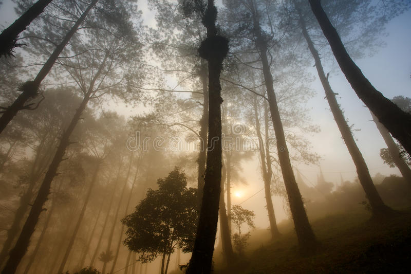 Mgłowy ranek przy Puncak Lawang zdjęcia stock