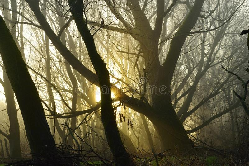 Mgłowy ranek w lesie obraz stock