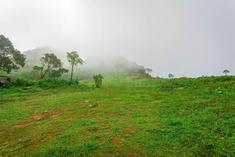Mgłowy ranek w Vagamon Kurishumala zdjęcie stock