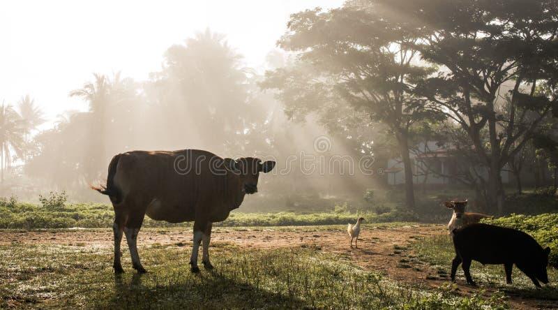 Mgłowy ranek w wiosce obraz stock