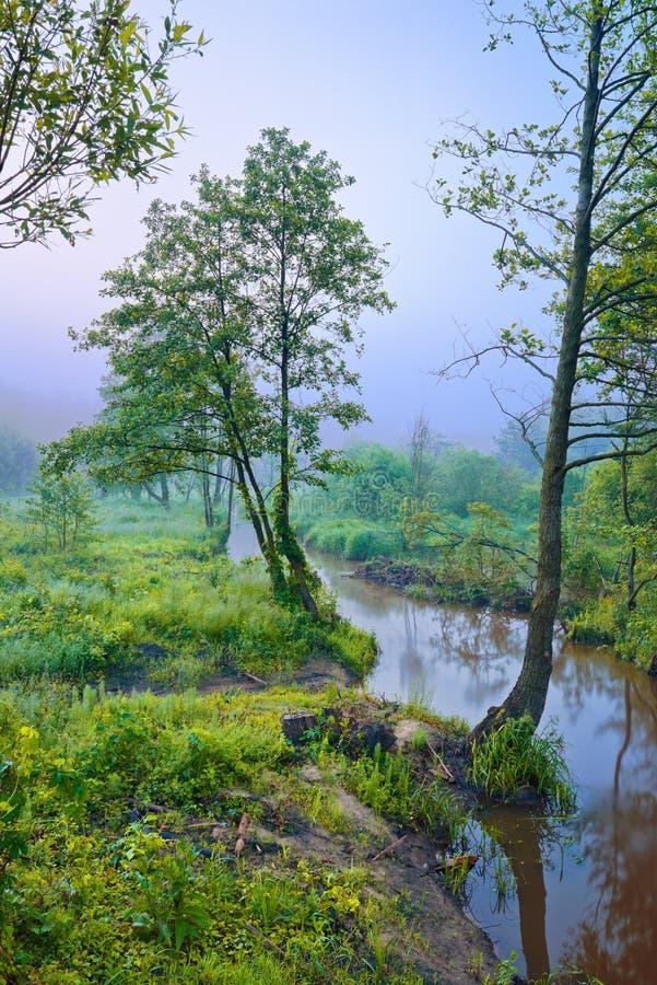 Mgłowy ranek z drzewem przy krawędzią strumyk zdjęcie stock