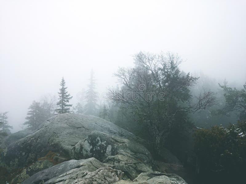 Mgłowy widok zdjęcie stock
