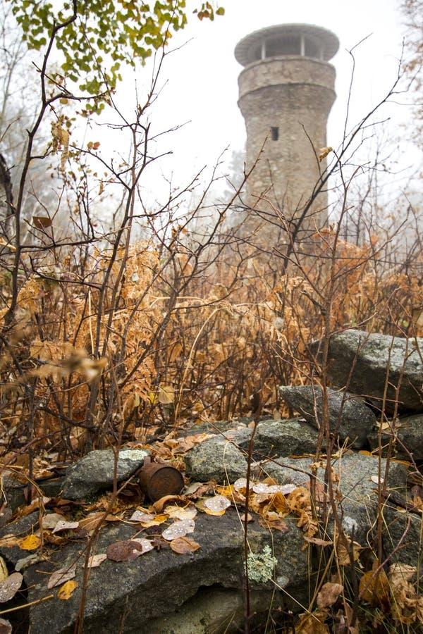 Mgłowy wierza Chujący w jesień lesie obrazy stock
