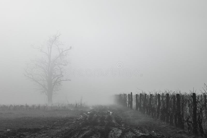 mgłowy winnica obrazy stock