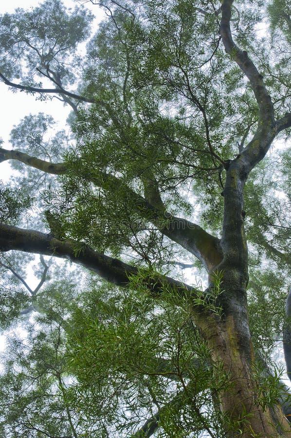 mgły drzewo obraz stock