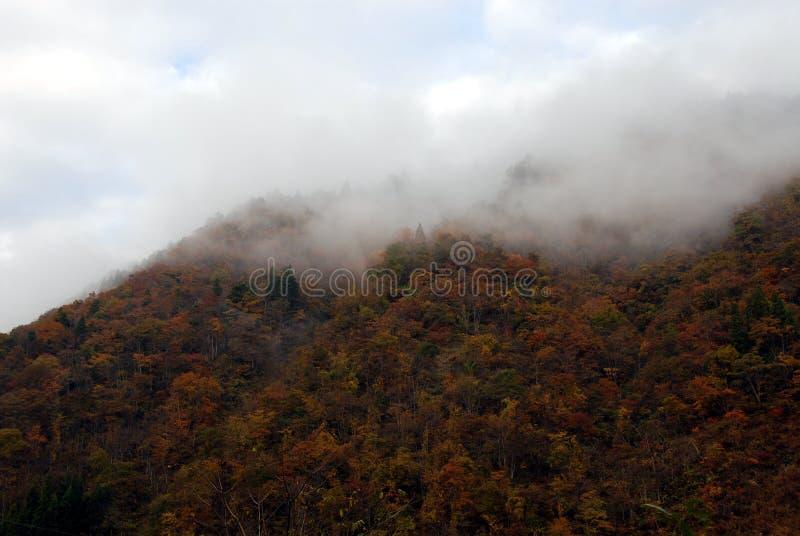 Mgły góry las obraz royalty free