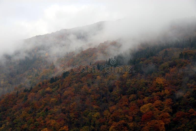 Mgły góry las obraz stock