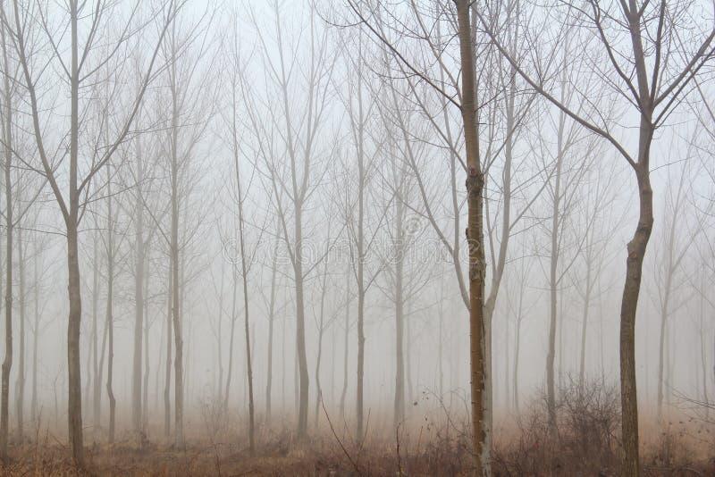 mgły lasowa zima fotografia royalty free