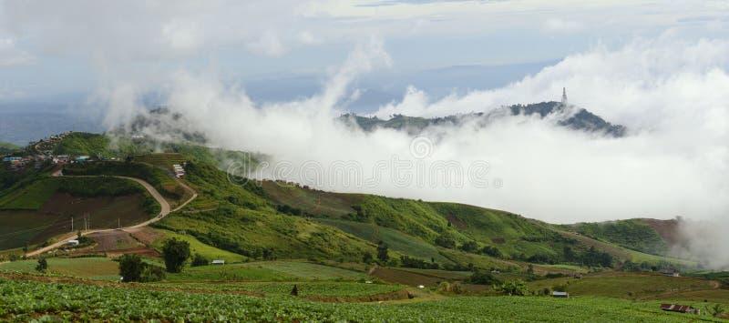 Mgły pokrywy kapusty gospodarstwo rolne fotografia royalty free