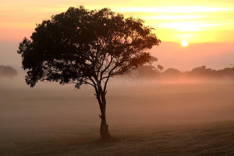 mgły wschód słońca drzewo obrazy stock