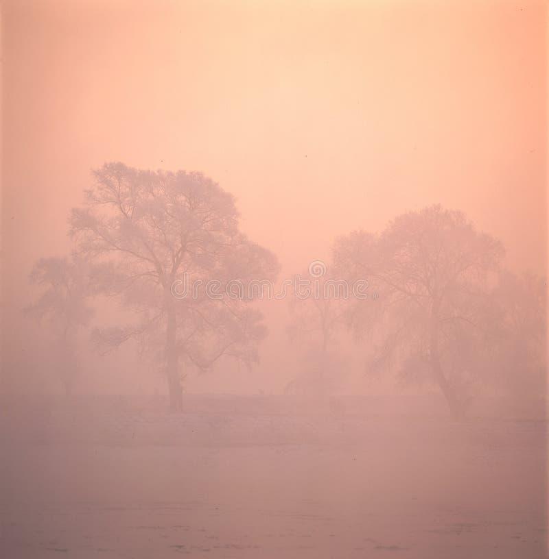 mgieł drzewa fotografia stock