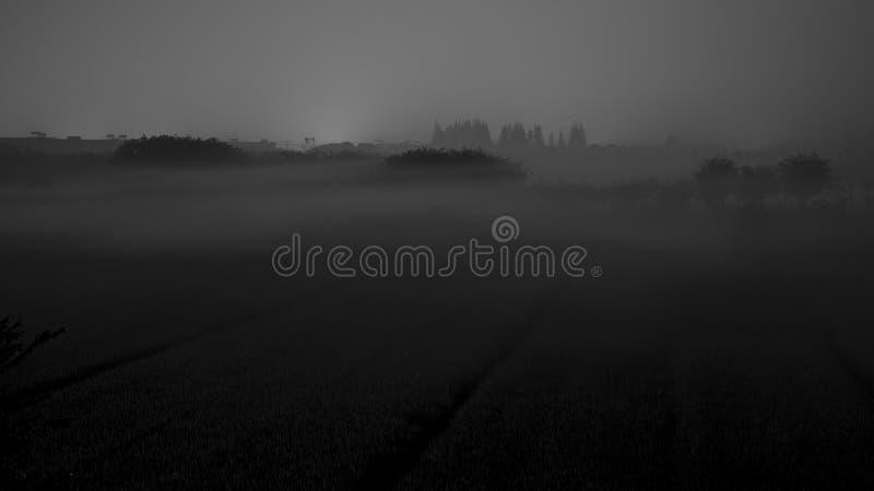 Mgliści ryż pola w wczesnym poranku zdjęcia royalty free