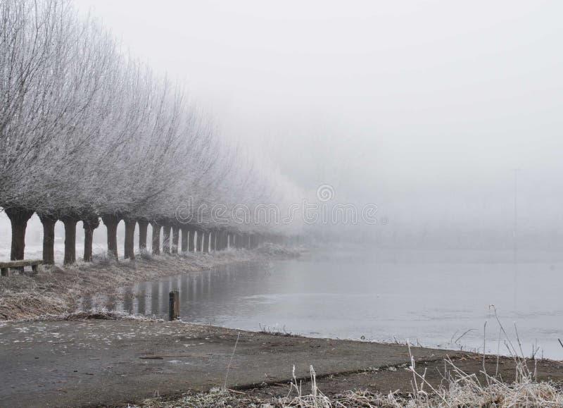 Mgliści zim drzewa z wodą obrazy stock