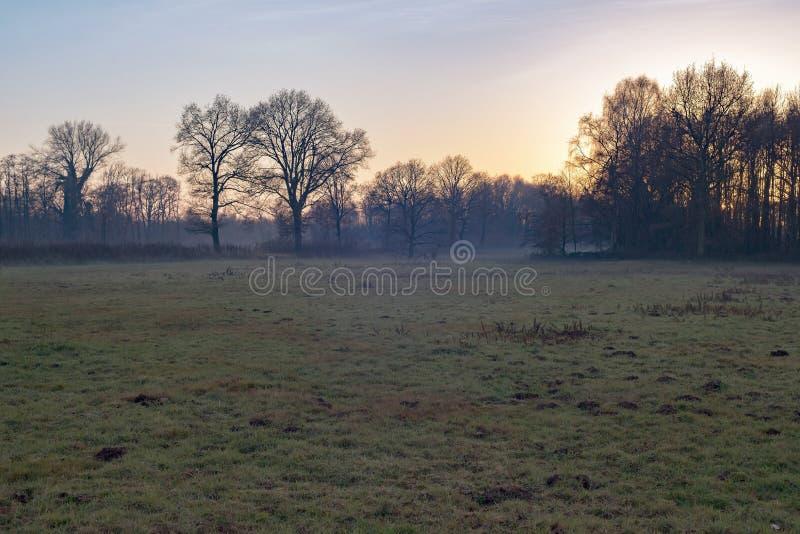 Mglista łąka z rzędami zim drzewa zdjęcie royalty free