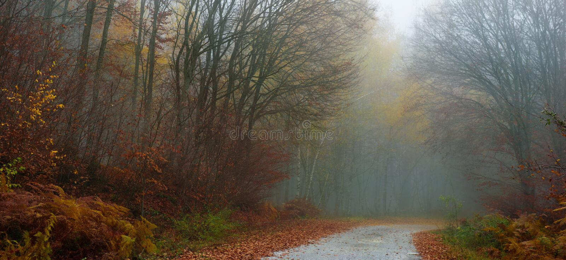 mglista jesień droga fotografia stock