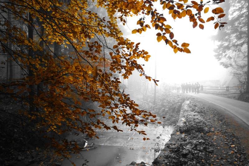 Mgliste góry - Złota jesień zdjęcia stock