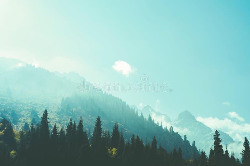 Mglistej mgły sosnowi lasowi halni skłony barwią tonowanie zdjęcia stock