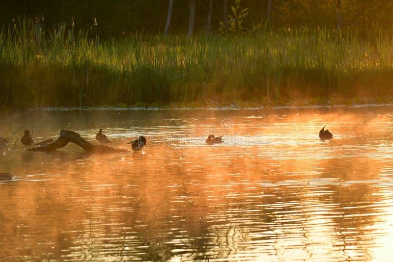 Mglisty Burnaby jezioro zdjęcia stock