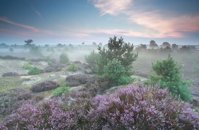 Mglisty heathland w lecie zdjęcia stock