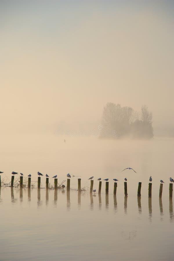 Mglisty jesień ranek Na jeziorze obraz royalty free