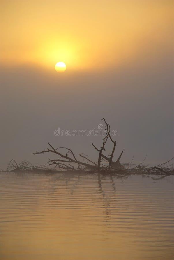 Mglisty jezioro przy wschodem słońca obrazy royalty free