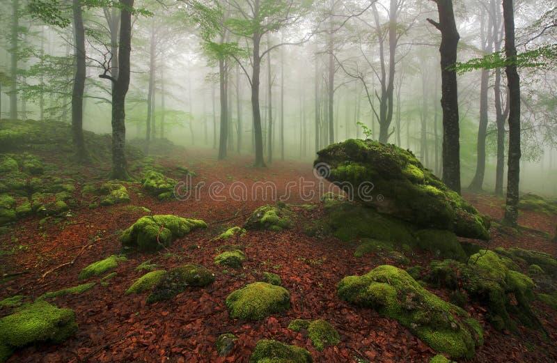 Mglisty las obrazy royalty free