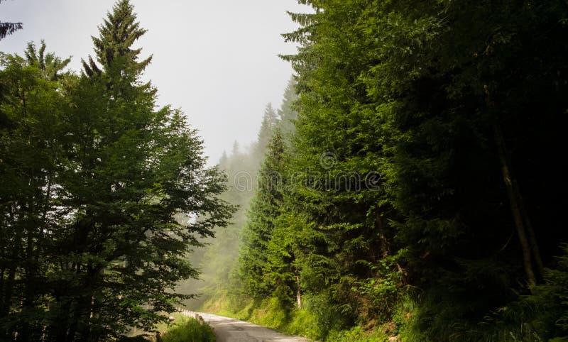 Mglisty las i sunrays na górach podczas lata Sistani zdjęcie stock