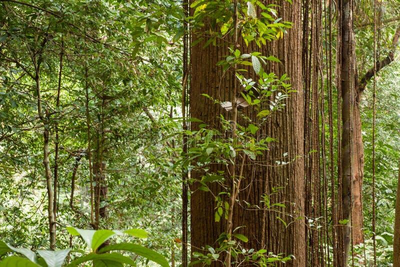 Mglisty las tropikalny fotografia stock