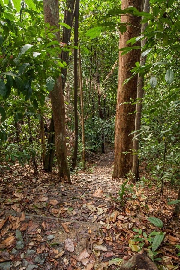 Mglisty las tropikalny zdjęcia stock