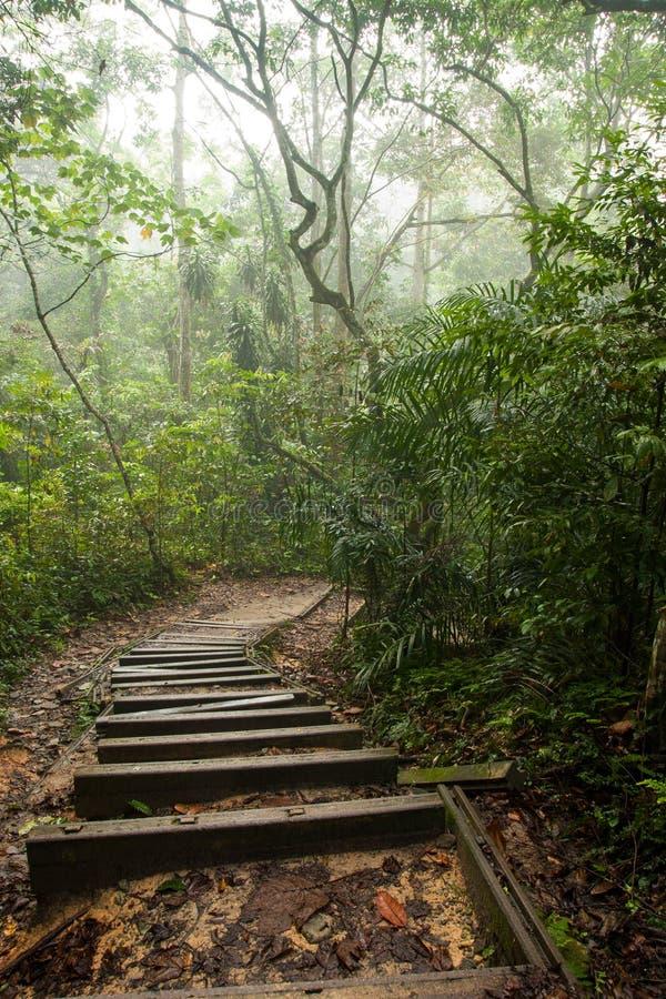 Mglisty las tropikalny obrazy stock