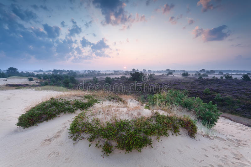 Mglisty lato wschód słońca nad piasek diuną obrazy stock