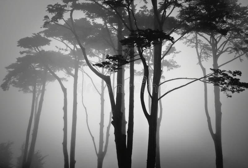 Mglisty mgła las lato zmierzch San Francisco obrazy stock