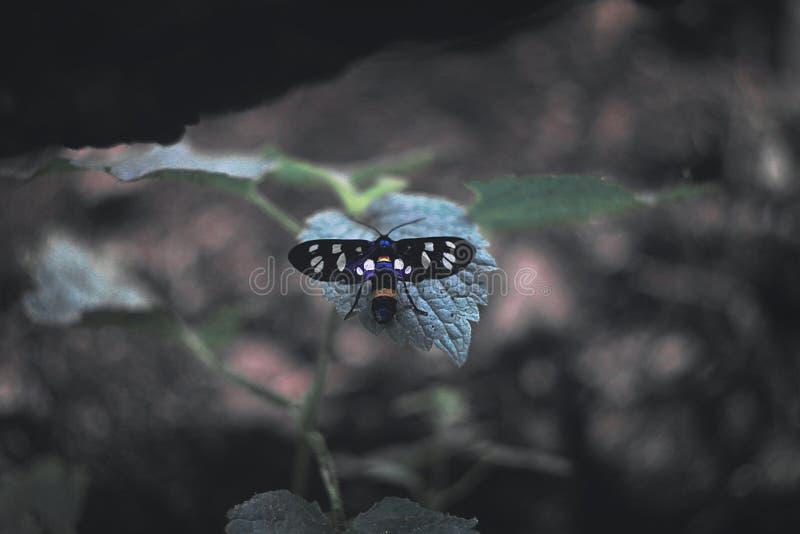 Mglisty motyl zdjęcia royalty free
