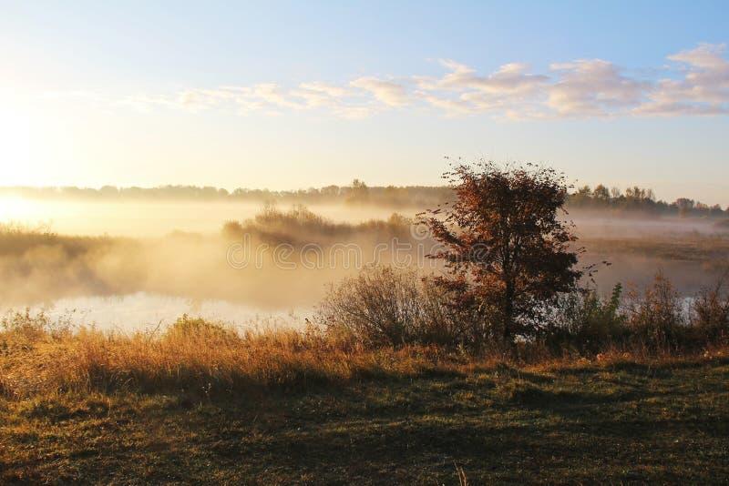 Mglisty natura krajobraz na wczesnym jesień ranku Rosja zdjęcia stock